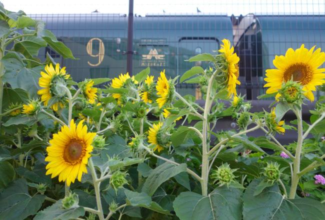 花で飾られた線路沿いの様子。